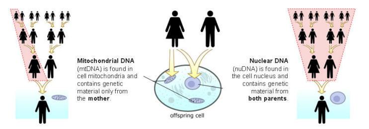 nucleair DNA