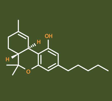 Active Ingredient in Marijuana Kills Brain Cancer Cells