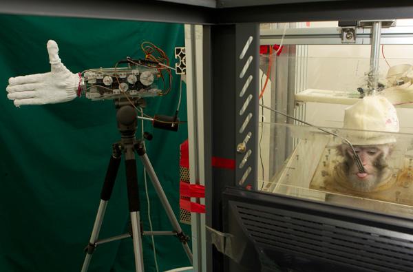 Monkey Controls Robot Hand Through Brain Implants