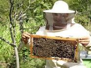 Poland Beekeepers Win Ban on Monsanto's GMO!