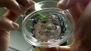 stem-cell-cloning-mitalipov.si