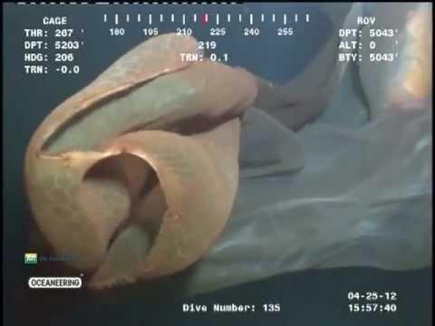 Strange Sea Creature caught on film