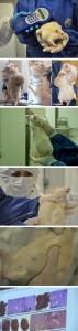 Rat-Tumor-Monsanto-GMO-Cancer-Study-225-v1