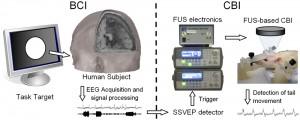 human-bci-to-rat-fus-cbi-diagram