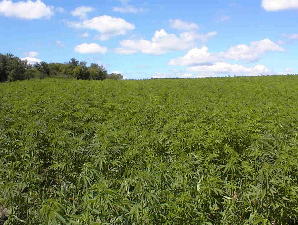 Oklahoma Initiative Would Make Pot a Legal, Exportable Cash Crop