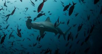 ocean-sea-damage-extinction.si