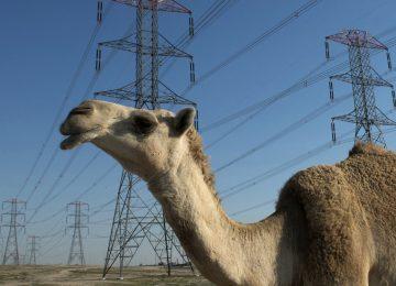 Saudi Arabia seeking bids for nuclear power project