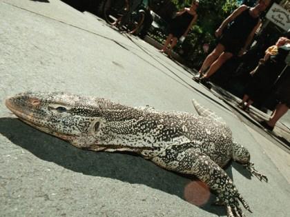 Residents warned: 6-foot lizard loose in Colorado