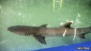 Anger as shark dies in US Kmart advert