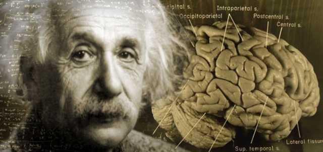 """Einstein's Brain Reveals Clues to Genius – """"Unique Anatomy"""""""