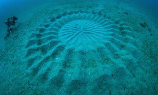 The Deep Sea Mystery Circle a love story