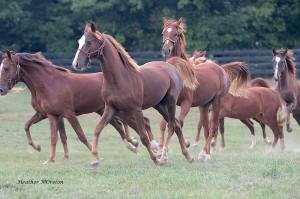 horse meat usda