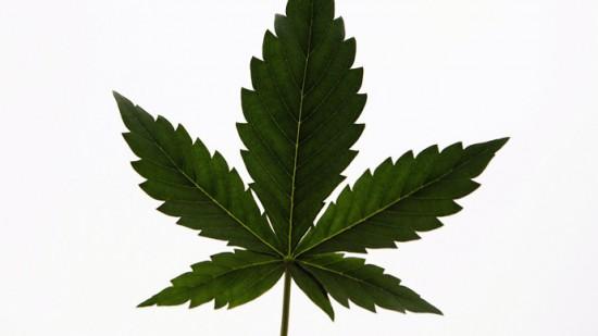 marijuana.si